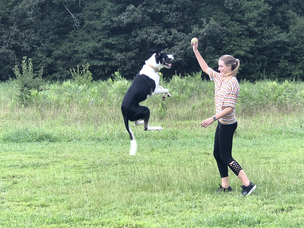 Best parks for dogs around Athens